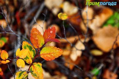 В Приморье 19 октября местами пройдут небольшие и умеренные дожди