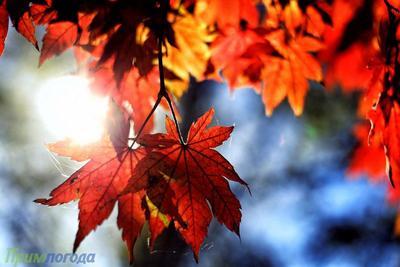 Осень в Приморье набирает обороты