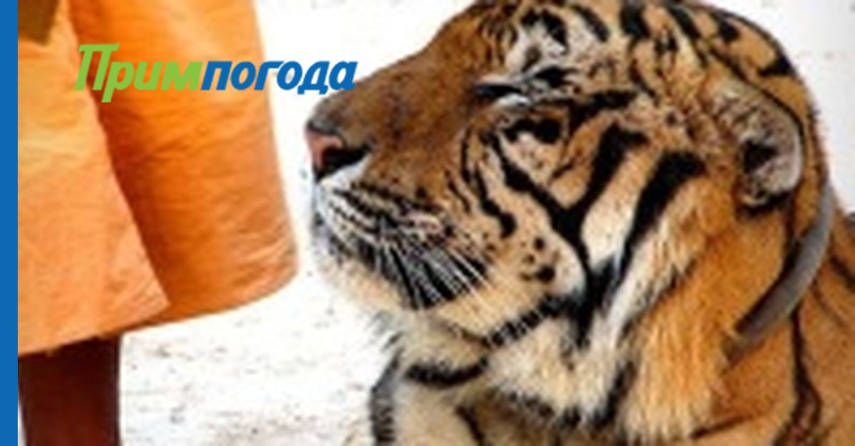 тигры появляются ночью 1975 смотреть онлайн